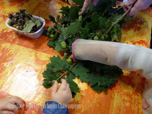les feuilles de chêne et les glands